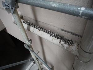 配管に鳩の糞